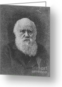 Theory Of Evolution Greeting Cards - Charles Robert Darwin, English Greeting Card by Science Source