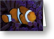 Tropical Climate Greeting Cards - False Ocellaris Clownfish In Its Host Greeting Card by Terry Moore