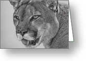 Panther Greeting Cards - Florida Panther Greeting Card by Larry Linton