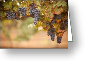 October Greeting Cards - Grapes on the Vine Greeting Card by Andy Dean