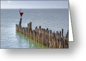 Crane Greeting Cards - Lake Constance Greeting Card by Joana Kruse