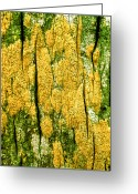 Vibrant Photo Greeting Cards - Tree Bark Greeting Card by John Foxx