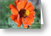 True Colors Greeting Cards - Macro Greeting Card by Joshua Fronczak