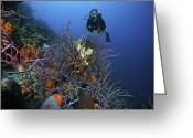 Animal Sport Greeting Cards - Scuba Diver Swims Underwater Amongst Greeting Card by Terry Moore
