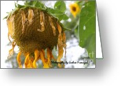 True Colors Greeting Cards - Sunflowers Greeting Card by Joshua Fronczak