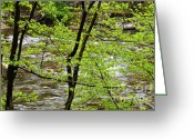Williams Greeting Cards - Williams River Scenic Backway Greeting Card by Thomas R Fletcher