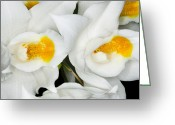 Petal Greeting Cards - Exotic Orchids of C Ribet Greeting Card by C Ribet