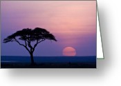 Tree. Acacia Greeting Cards - African Sunrise Greeting Card by Michele Burgess