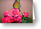 Designer Butterfly Works Photo Greeting Cards - Butterfly Collection Design Greeting Card by Debra     Vatalaro