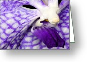 Petal Greeting Cards - Exotic Orchid Flowers of C Ribet Greeting Card by C Ribet