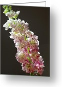 Stock Still Life Photo Greeting Cards - Stock Greeting Card by Robert Ullmann