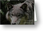 Photograph Of Alpha Wolf Greeting Cards - The Wild Wolve Group B Greeting Card by Debra     Vatalaro