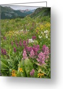 Rosy Greeting Cards - Wildflower Meadow Greeting Card by Bob Gibbons