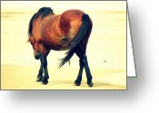 Bay Horse Greeting Card Greeting Cards - A beach stroll Greeting Card by Kim Galluzzo-Wozniak