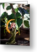Fairies Art Greeting Cards - A beautiful day 2 Greeting Card by Angelina Cornidez