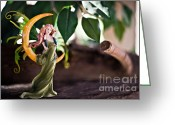 Fairies Art Greeting Cards - A beautiful day Greeting Card by Angelina Cornidez