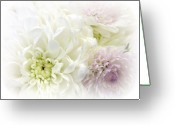Beautiful Flowers Greeting Cards - A Beautiful Dream Greeting Card by Kathy Bucari