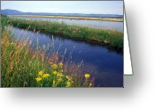 Landscape Framed Prints Greeting Cards - A Birds Sanctuary in Idaho Greeting Card by Kathy Yates