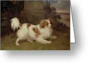 Spaniels Greeting Cards - A Blenheim Spaniel Greeting Card by William Webb