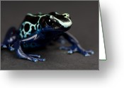 Captive Animals Greeting Cards - A Blue And Yellow Poison Dart Frog Greeting Card by Joel Sartore