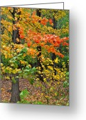 Swaying Greeting Cards - A Blustery Autumn Day Greeting Card by Robert Harmon