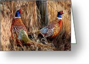 Pheasant Greeting Cards - A Brace Greeting Card by James Shepherd