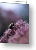 Close Views Greeting Cards - A Bumblebee Collects Pollen On A Flower Greeting Card by Taylor S. Kennedy