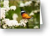 Rating Greeting Cards - A Butterfly Affair Greeting Card by Syed Aqueel