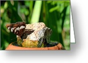Drinking Water Greeting Cards - A Butterfly Enjoys A Drink Greeting Card by Will Borden
