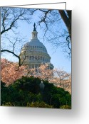 Us Capital Greeting Cards - A Capital Cherry Blossom  Greeting Card by Don Allen