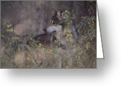Telephoto Greeting Cards - A Captive Mexican Gray Wolf Pauses Greeting Card by Annie Griffiths