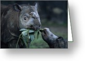 Head And Shoulders Greeting Cards - A Captive Sumatran Rhinoceros Greeting Card by Joel Sartore