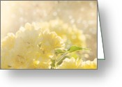 Roses Photos Greeting Cards - A Chance of Showers Greeting Card by Amy Tyler