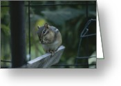 Wood Fences Greeting Cards - A chipmunk eats a seed Greeting Card by Taylor S. Kennedy