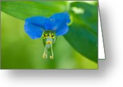 Property Released Photography Greeting Cards - A Close-up Of A Bright Blue Flower Greeting Card by Joel Sartore