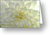 State Flowers Greeting Cards - A Close Up Of A White Dahlia Flower Greeting Card by Raul Touzon
