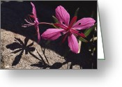 Fireweed Greeting Cards - A Close View Of A Dwarf Fireweed Flower Greeting Card by George F. Mobley