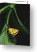 Madre Greeting Cards - A Close View Of A Spiny-backed Spider Greeting Card by Tim Laman