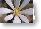 Spring Scenes Greeting Cards - A close view of a spring Greeting Card by Taylor S. Kennedy