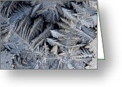 Close Views Greeting Cards - A Close View Of Frost Crystals Greeting Card by Tim Laman