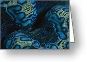 Tridacna Species Greeting Cards - A Close View Of The Colorful Mantle Greeting Card by Tim Laman