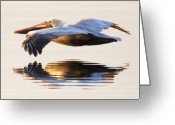Pelican Photo Greeting Cards - A Closer Look Greeting Card by Janet Fikar