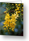 Image Type Photo Greeting Cards - A Cluster Of Flowers Cascades Greeting Card by Jason Edwards