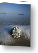 Time Exposures Greeting Cards - A Conch Shell Washed Up On A Ahore Greeting Card by George Grall