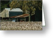 Housing Greeting Cards - A Cotton Field Surrounds A Small Farm Greeting Card by Medford Taylor