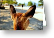 Point Of View Greeting Cards - A Deers Point of View Greeting Card by Dean Harte