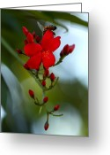 ; Maui Greeting Cards - A Delicate Embrace Greeting Card by Karon Melillo DeVega