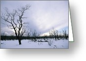 Desolate Landscapes Greeting Cards - A Desolate, Snowy Winter Landscape Greeting Card by Rich Reid