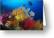 Ecosystem Greeting Cards - A Diver Looks On At A Colorful Reef Greeting Card by Steve Jones