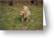 Domestic Scenes Greeting Cards - A dog plays catch in the Greeting Card by Stacy Gold